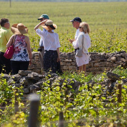 OLIVIER LEFLAIVE - Visite technique des vignes