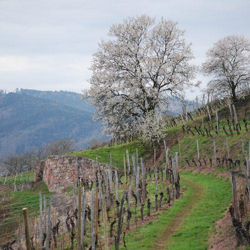 LA NOUVELLE AUBERGE - Coffret Terroirs d'Alsace et Bistrot