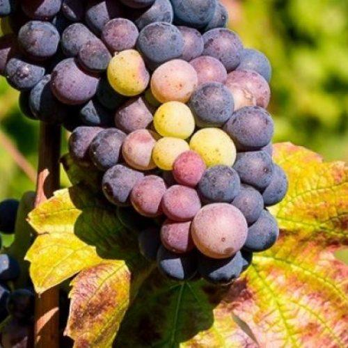 AUBERGE DE CLOCHEMERLE - Soirée vigneron