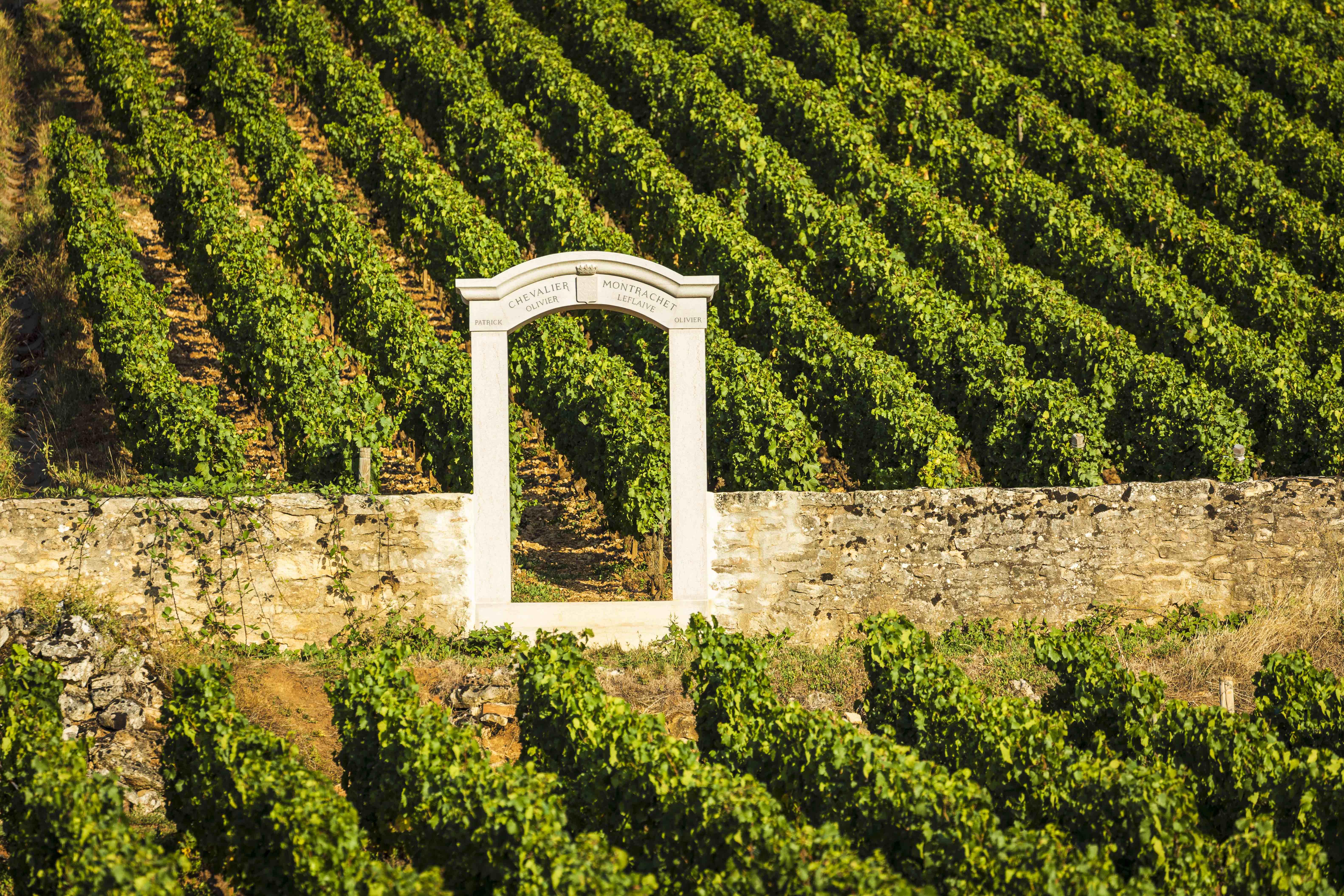 OLIVIER LEFLAIVE - Découverte de la vigne au verre