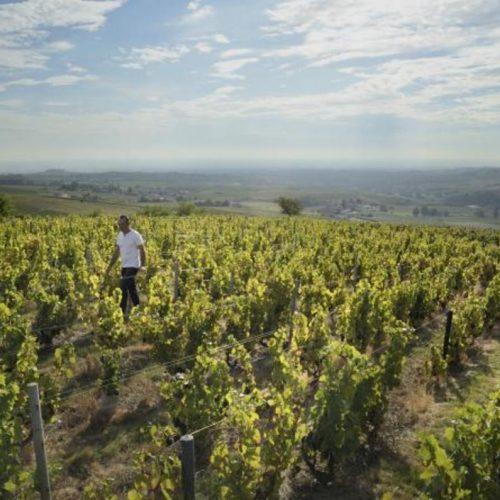 AUBERGE DE CLOCHEMERLE - Vigneron d'un jour.....Vigneron toujours.....