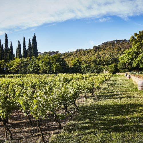 HOSTELLERIE DE L'ABBAYE DE LA CELLE - Coffret Vignobles & Découvertes en Provence